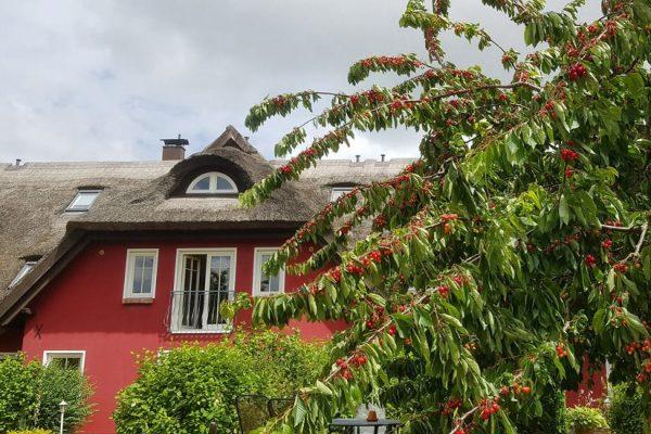 urlaub-auf-ruegen--an-der-ostsee-karolas-landhus-in-alt-reddevitz